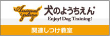 Animal Plaza Dog Training